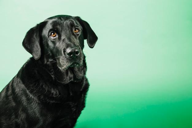 Cão engraçado no fundo verde Foto gratuita