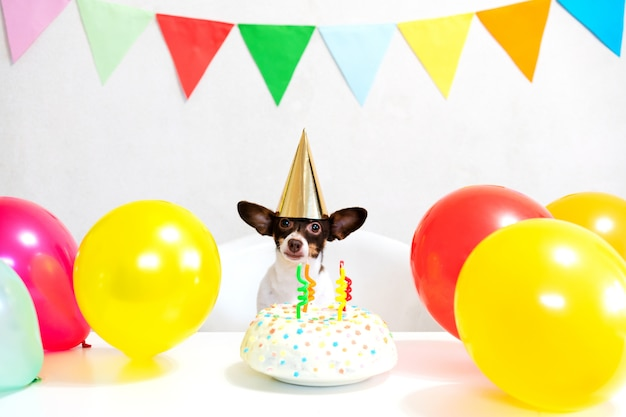 Cão engraçado pequeno bonito com um bolo de aniversário e um chapéu de festa comemorando aniversário com amante de menina. mulher jovem e bonita e um cachorro no caps de férias. feliz aniversário. conceito de amizade .. Foto Premium