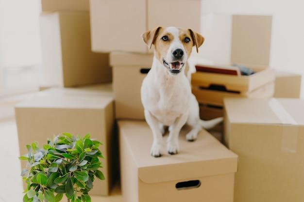 Cão engraçado senta-se em caixas de papelão, Foto Premium