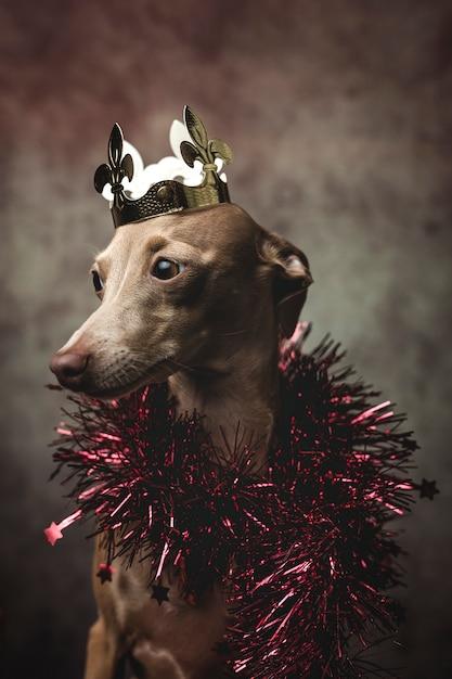 Cão engraçado vestido como um rei feiticeiro. natal Foto Premium
