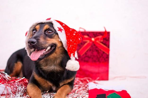 Cão feliz com chapéu vermelho de natal e presentes ao seu redor Foto Premium