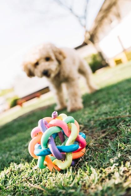 Cão feliz se divertindo no parque Foto gratuita