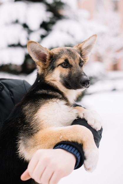 Cão feliz sentado nas mãos de um homem no inverno de neve Foto Premium