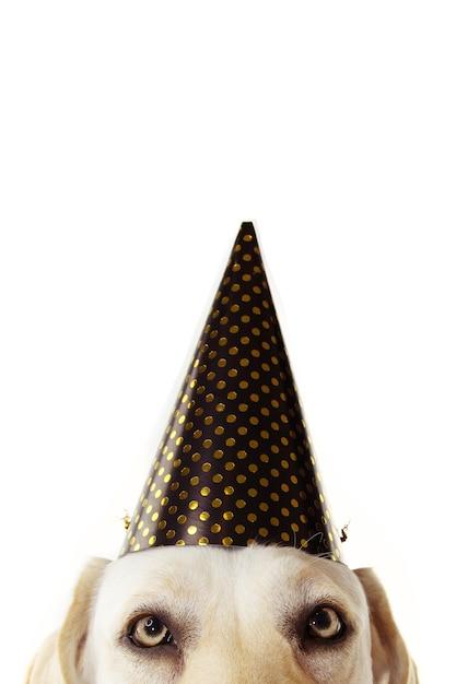 Cão festivo de close-up esconde usando um chapéu de bolinhas douradas comemorando o ano novo, aniversário ou carnaval Foto Premium