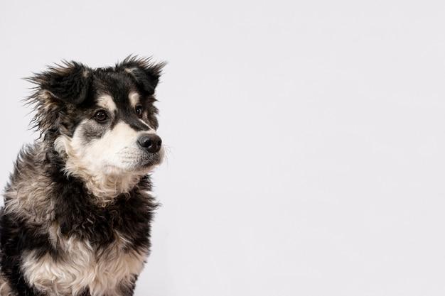 Cão fofo no fundo branco Foto gratuita