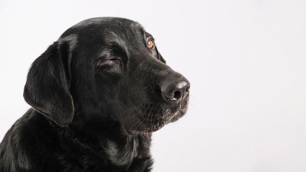 Cão fofo piscando Foto Premium