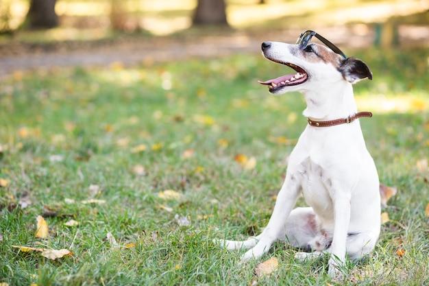 Cão legal usando óculos escuros sentado Foto gratuita