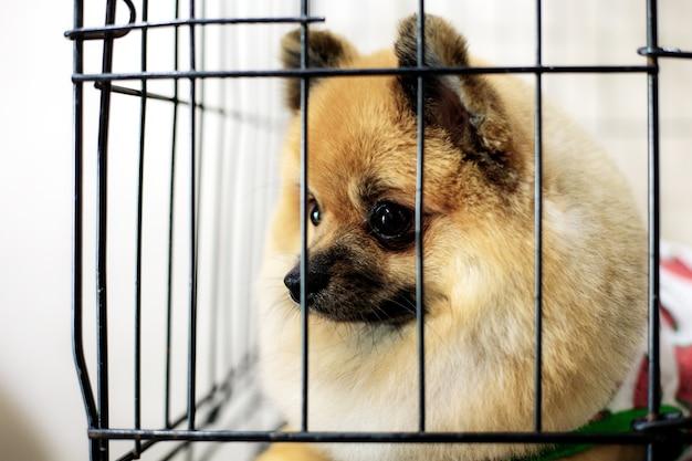 Cão na gaiola em pet shop. Foto Premium
