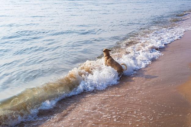 Cão nadar em mares revoltos. Foto Premium