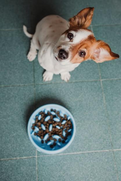 Cão pequeno bonito pronto para comer sua comida de cachorro Foto Premium