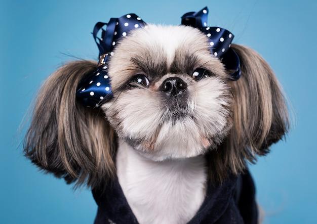 Cão pequeno bonito vista frontal Foto Premium