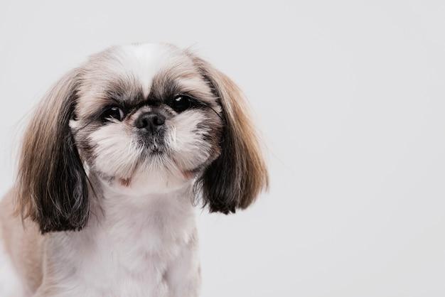 Cão pequeno bonito vista frontal Foto gratuita