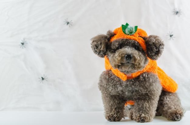 Cão poodle preto com vestido de abóbora. Foto Premium