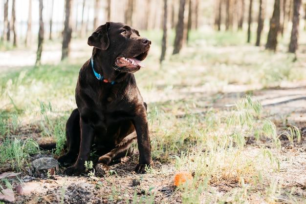 Cão preto feliz na natureza Foto gratuita