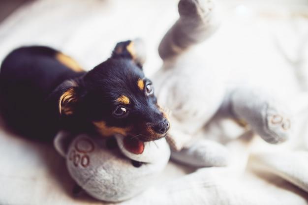 Cão preto pequeno Foto gratuita