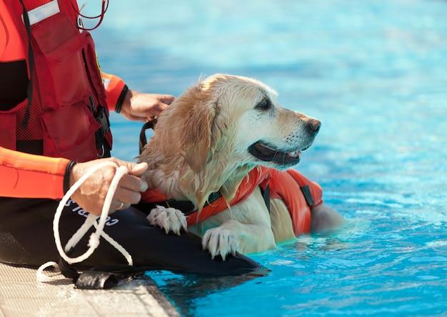 Cão salva-vidas Foto Premium