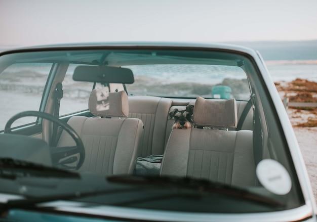 Cão sentado no banco de trás de um carro velho e elegante Foto gratuita