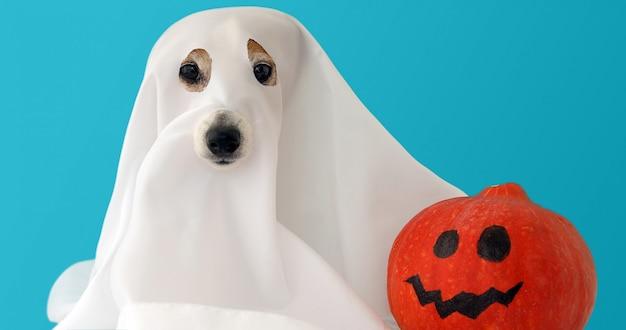 Cão sente-se como um fantasma para o halloween com abóbora Foto Premium