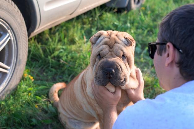 Cão sharpei na natureza no pôr do sol Foto Premium