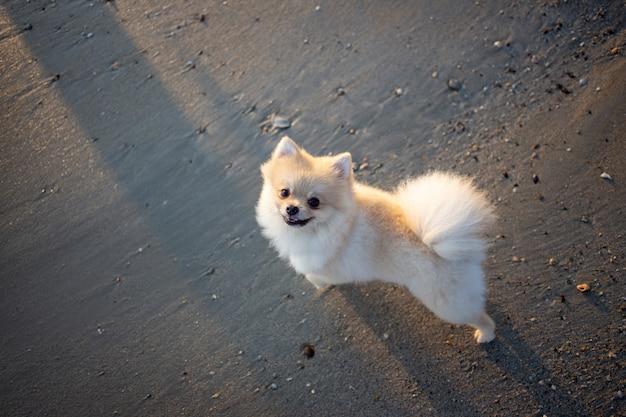 Cão vadio bonito na areia Foto Premium