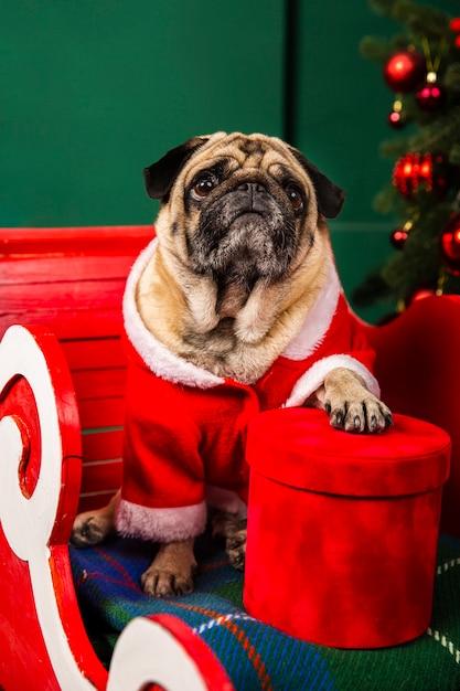 Cão vestido de papai noel sentado no trenó Foto gratuita