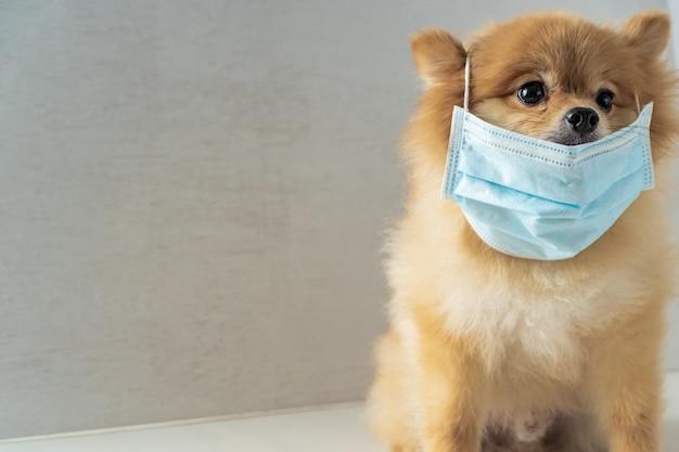 Cão vestindo máscara de poluição do ar para proteger a poeira pm2. Foto Premium