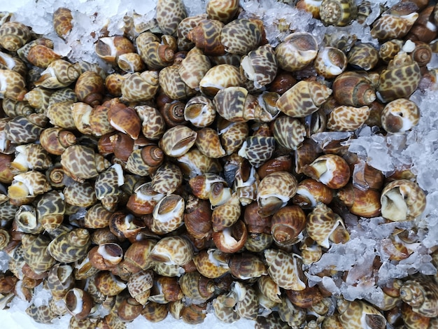 Caracóis frescos à venda no mercado. foco suave. Foto Premium