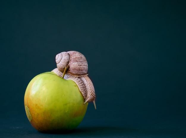 Caracol na maçã no fundo. Foto Premium