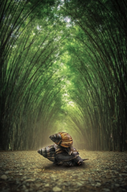Caracol no chão. o caminho flanqueado por dois lados sem fundo de floresta de bambu. Foto Premium