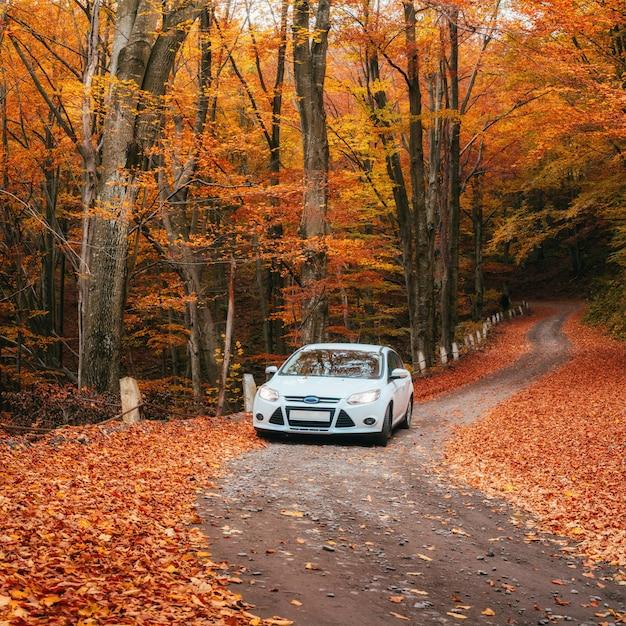 Carro em um caminho da floresta Foto Premium