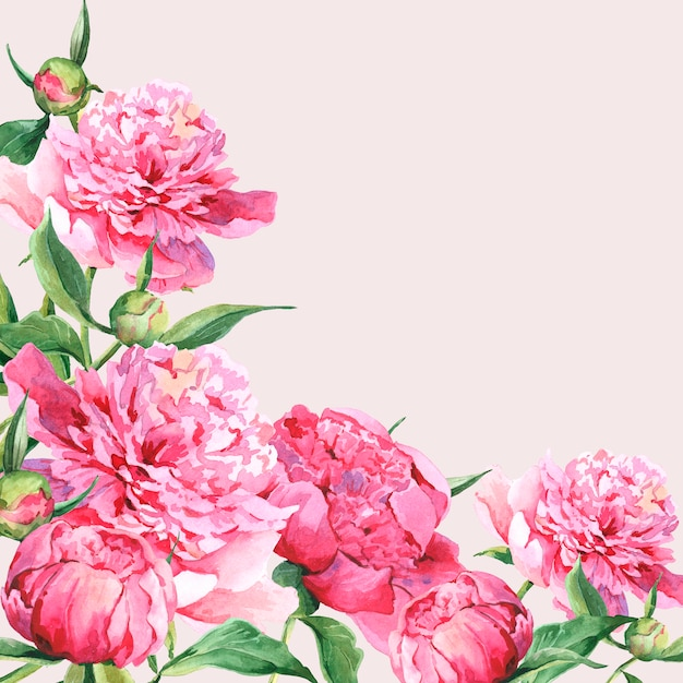 Cartão cor-de-rosa do vintage das peônias da aguarela Foto Premium
