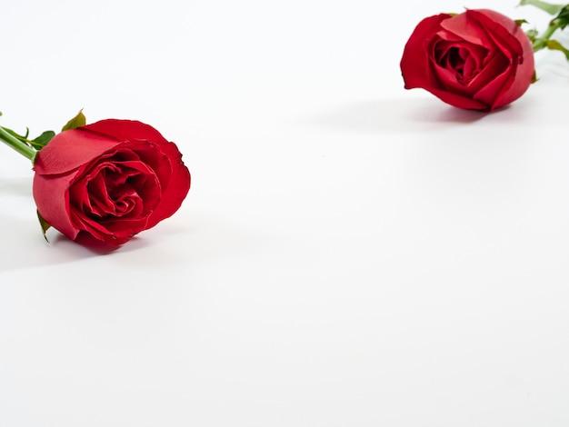 Cartão de dia dos namorados rosa vermelha dois. Foto Premium