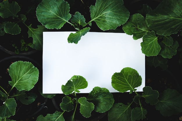 Cartão do livro branco no fundo da planta verde, conceito da propaganda. Foto Premium