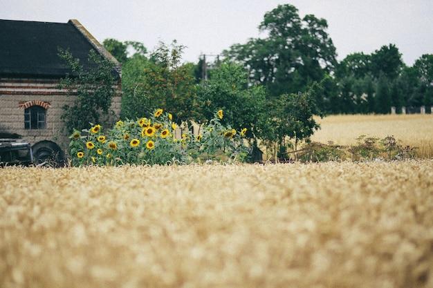 Casa de campo com palha seca Foto gratuita