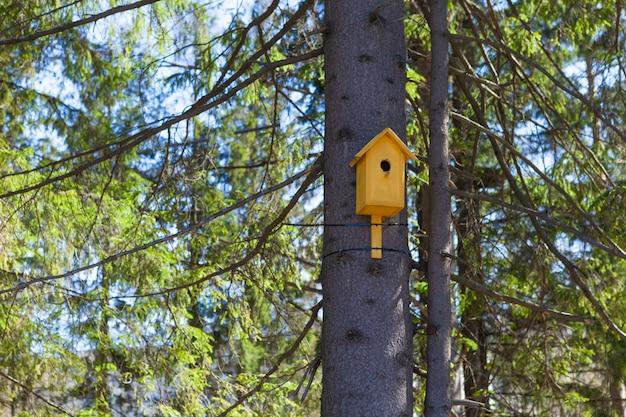Casa de passarinho amarela velha em uma árvore, cuidado do pássaro Foto Premium