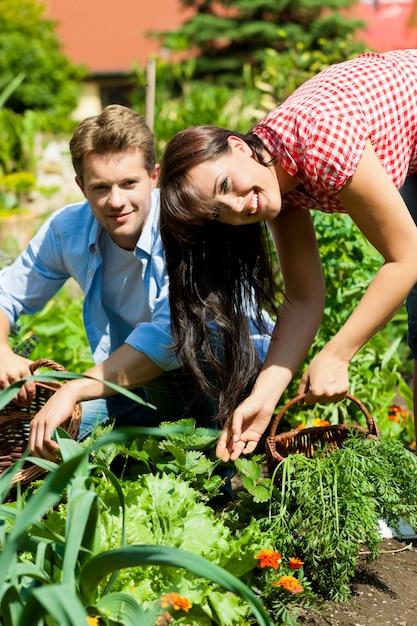 Casal feliz colhendo legumes em seu jardim Foto Premium