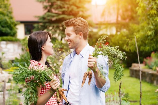 Casal feliz na horta colhendo cenouras Foto Premium