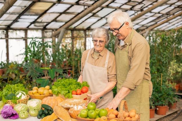 Casal sênior de avental e óculos colocando uma caixa de legumes na mesa enquanto a colhe em uma estufa Foto Premium