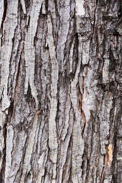 Casca de madeira com aparência envelhecida Foto gratuita