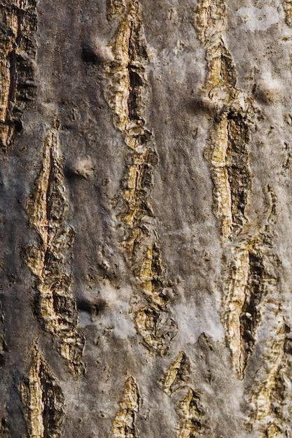 Casca de uma árvore, tronco, textura, vertical Foto Premium