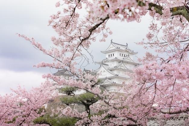 Castelo de japão himeji, white heron castle na bela temporada de flor de cerejeira sakura Foto Premium