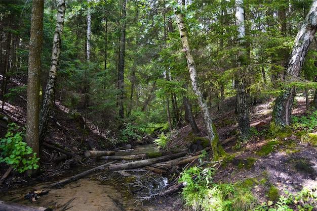 Castores fizeram uma barragem em um rio em uma floresta Foto Premium