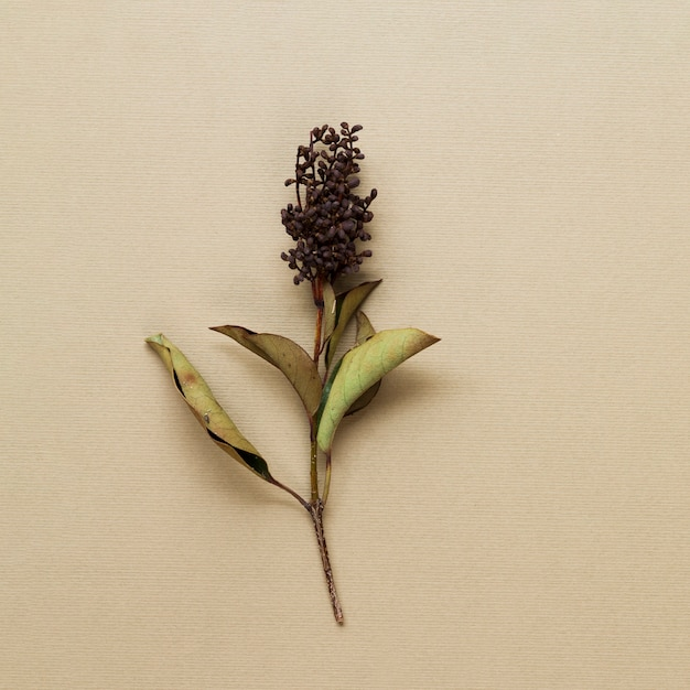 Caule de planta seca em fundo bege Foto gratuita
