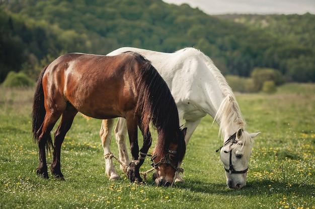 Cavalo alezan marrom passeio mane Foto gratuita