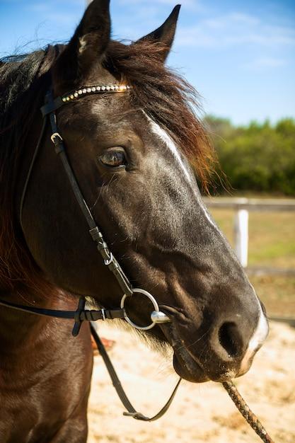 Cavalo bonito Foto Premium