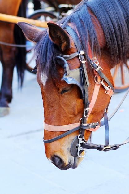 Cavalo bonito Foto gratuita