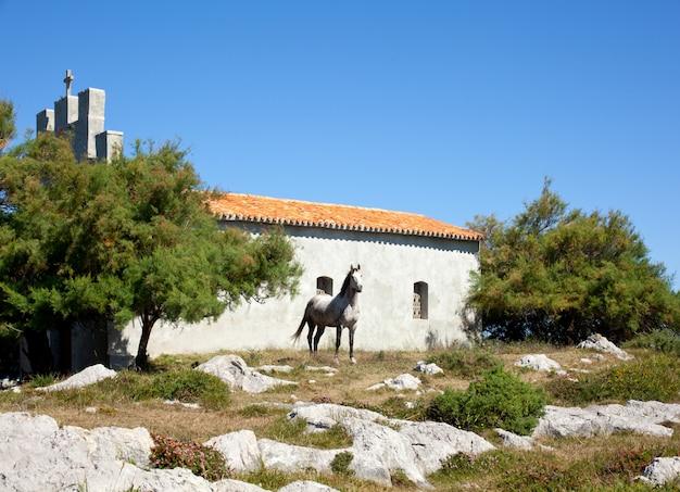 Cavalo branco ao lado da igreja Foto Premium