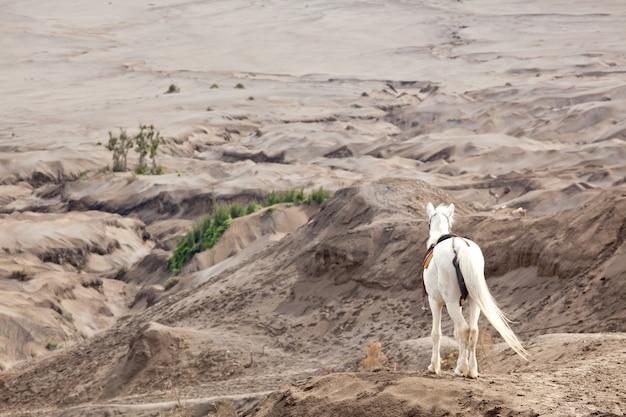 Cavalo branco contra deserto Foto Premium