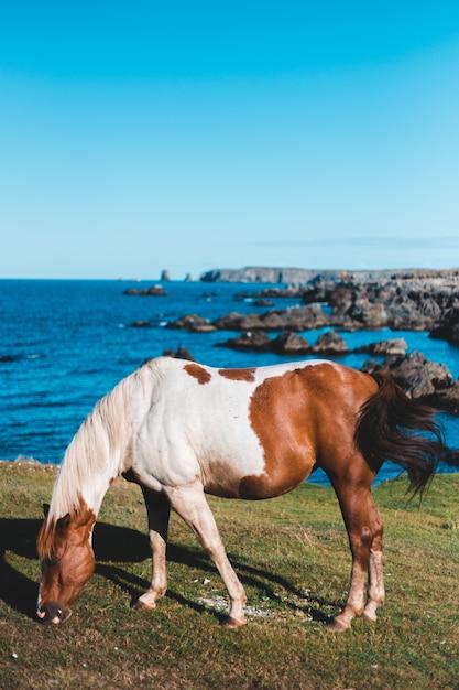 Cavalo branco e marrom na grama Foto gratuita
