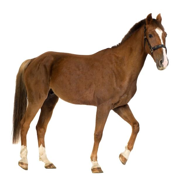 Cavalo branco Foto Premium